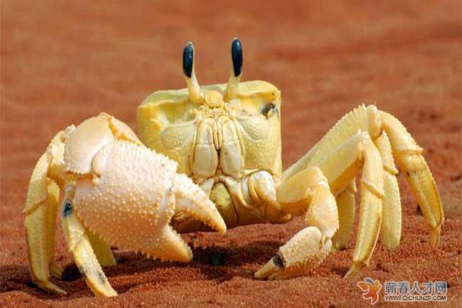 """身为管理者,不清除团队中的""""螃蟹文化"""",团队很难成事"""